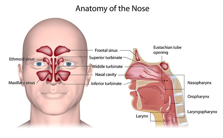 Sinusitis Pressure Relief In Bellmore , NY - Bellmore Acupuncture Clinic